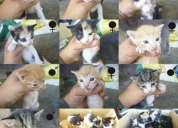 Dou gatinhos bebés machos e femeas