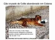 Cão abandonado em sintra