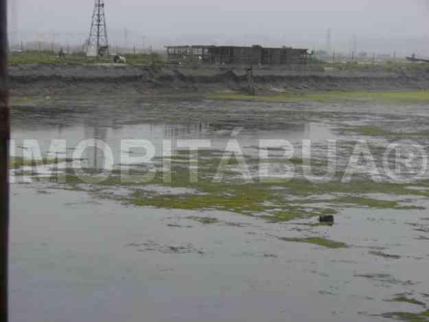 Ref. A041 - Viveiros com 2.6 ha situados nos terrenos do salgado da Figueira da Foz...