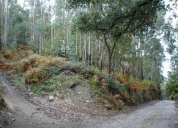 Terreno florestal- s. martinho do vale - v. n. famalicÃo